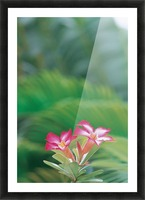 landscape_2_0046 Picture Frame print