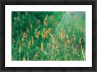 landscape_2_0157 Picture Frame print