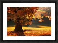 landscape_2_0386 Picture Frame print