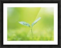 landscape_2_0846 Picture Frame print