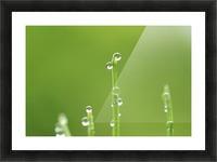 landscape_2_0986 Picture Frame print