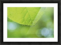 landscape_2_0988 Picture Frame print