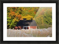 Wine grape vineyard in autumn with bird netting covering the vines to protect the crop shortly before harvest; Knowlton, Quebec, Canada Picture Frame print