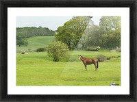 Horse in field; Morpeth, Northumberland, England Picture Frame print
