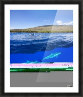 A split view of spinner dolphin (Stenella longirostris) below water and the island of Lanai above; Hawaii, United States of America Picture Frame print