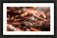 Wood Chips Picture Frame print