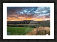 Morning Glory Picture Frame print