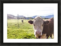 Afternoon Moos Picture Frame print