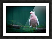 Nature and Birds 14 Picture Frame print
