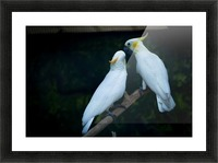 Nature and Birds   15 Picture Frame print