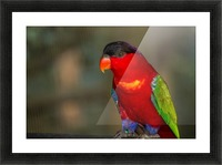 Nature and Birds  11 Picture Frame print