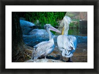 Nature and Birds   9 Picture Frame print