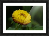 Nature and Flowers 7 Picture Frame print