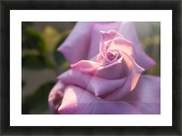 Nature and Flowers 6 Picture Frame print
