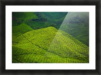 Tea plantations Picture Frame print