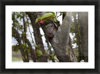 Rotten Berry  Picture Frame print