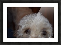 Hungry Eyes  Picture Frame print