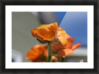 Spring in Bloom Picture Frame print