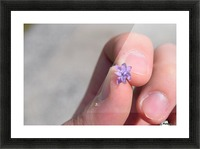 Tiny Flower  Picture Frame print