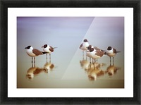 Birds on the Beach Picture Frame print