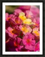 flowers 1 Picture Frame print