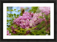 Rose Acacia  Picture Frame print