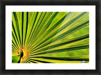 PALM-TREE LEAF 1 Picture Frame print