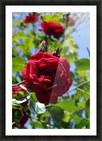 Red, White and Blue Picture Frame print