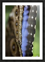 Blue Morpho Picture Frame print