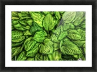 Hosta Glow Picture Frame print