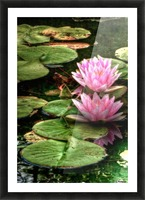 Rosewater Picture Frame print