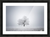 White solitude and light Picture Frame print