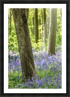 Bluebell Wood Picture Frame print
