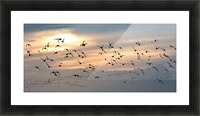 Coming home to roost Picture Frame print