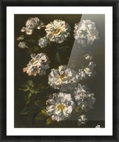 A study of striped white gallica roses Picture Frame print
