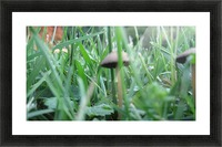 Mushroom 3 Picture Frame print