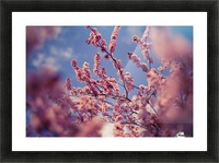 Spring cherry flowers Picture Frame print