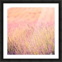 Sunset lavender flowers, instagram effect Picture Frame print