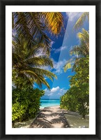 Palm trees low angle view Picture Frame print