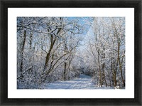 Forest covered with snow Picture Frame print