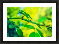 MHPBartlettArboretum 10 Picture Frame print