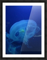 Moon Jelly Picture Frame print