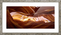 Antelope Picture Frame print