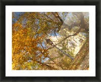 Autumn Reflections I Picture Frame print