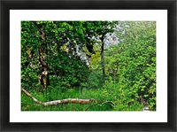 Life in the Shadows of the Trees Picture Frame print
