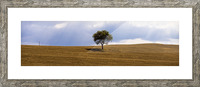 Tuscany Tree Picture Frame print