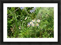 Wild flowers Picture Frame print
