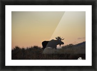 On the move Picture Frame print