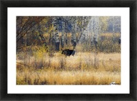 Early light in Gros Ventre Picture Frame print