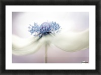 Anemone Picture Frame print